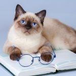 自己投資としての読書⇒どんな本を、どれだけ読むべきか?