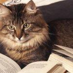 やってる?「7つの習慣」的読書